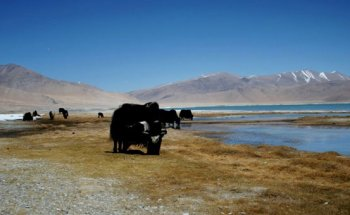 Rumtse is situated 70 Kms east of Leh, the starting point...